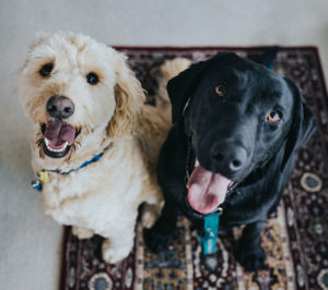 It is a Dogs Life: Living with Pets in Shreveport Corporate Housing Solutions
